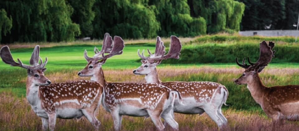 DeerHCP